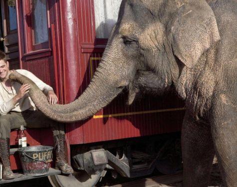 Affitto Animali ed elefanti per eventi